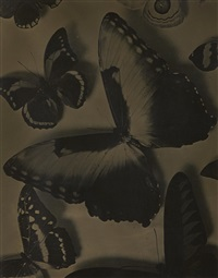man-ray-papillons