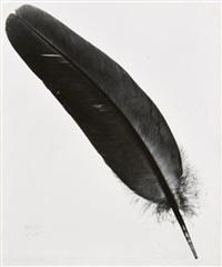 man-ray-plume